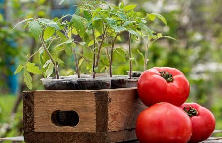 Лунный посевной календарь о сроках пересадки томатов в марте