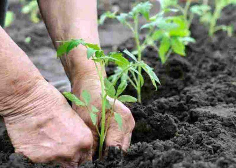 Рост растений усиливается в период от новолуния до полнолуния