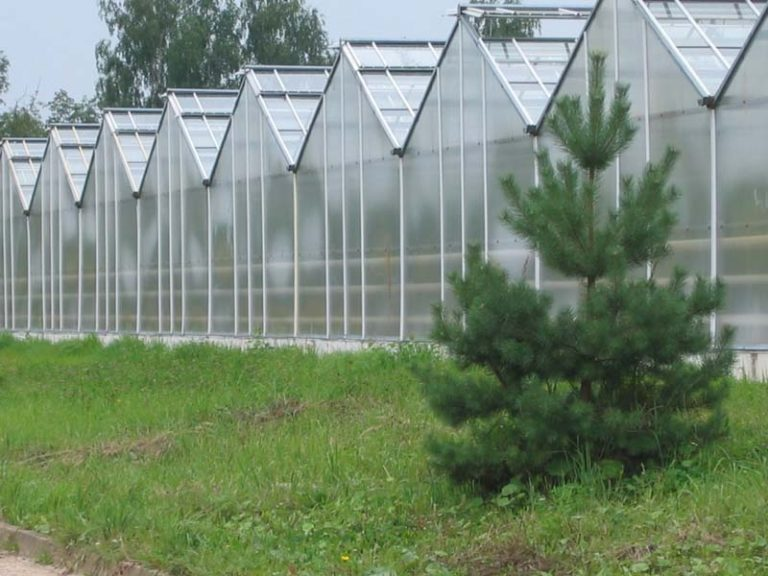 Агропромышленный комплекс, оснащенный множеством подобных теплиц под посев разнообразных овощей, цветов, зелени и другой полезной растительности