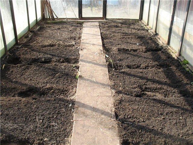 Верхний слой грунта, около 10 см, срезайте каждый год. Свои силы он уже отдал для вашего урожая