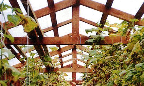 Брус, используемый для возведения постройки, предварительно обрабатывается антисептиком