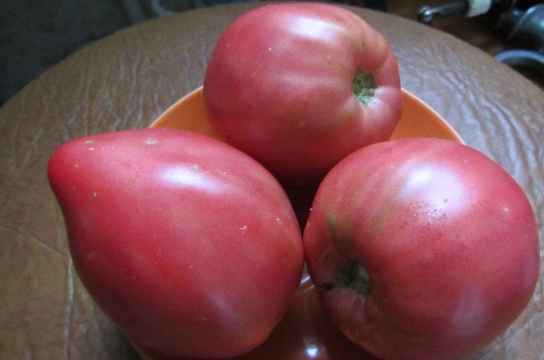 Мясистые, сочные, почти без семечек плоды пригодны для любых приготовлений. Из таких овощей можно приготовить отличный, с насыщенным томатным вкусом сок