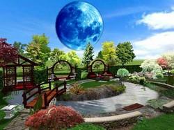 Лунный посевной календарь для Подмосковья на 2017 год помогает садоводам сориентироваться в сроках проведения работ на приусадебных участках