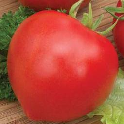 В регионах с умеренным и теплым климатом лучше всего высаживать томат «Буденовка»