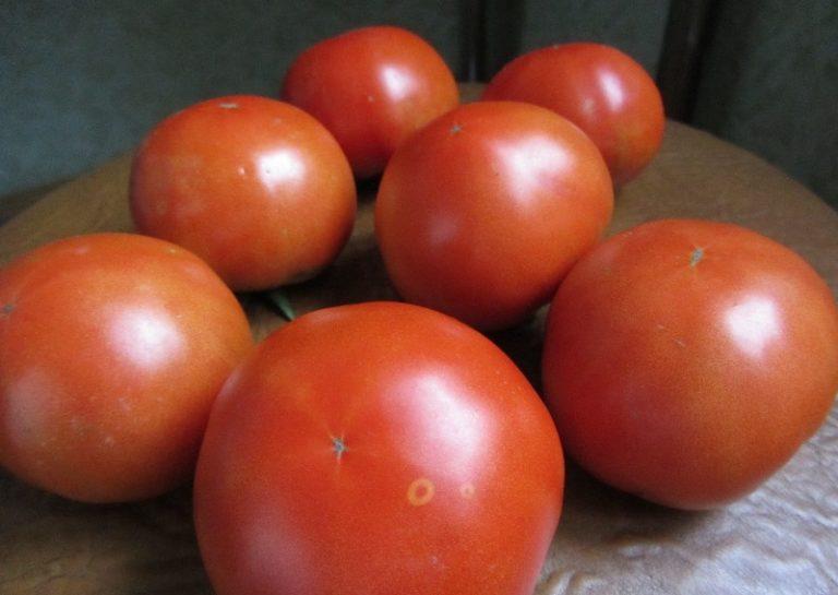 При удачном летнем сезоне помидоры этого сорта радуют дачников урожаем, до 15 кг товарных овощей с одного экземпляра
