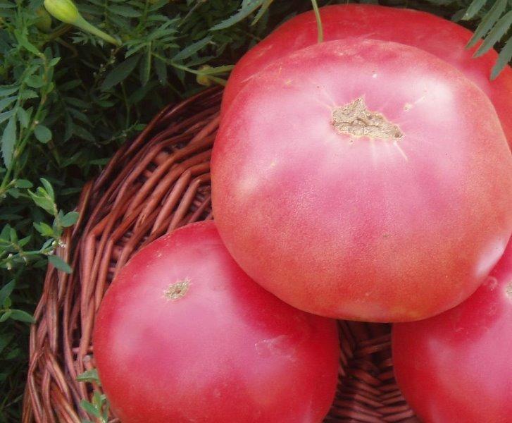 Средняя масса томатов составляет 300 г.