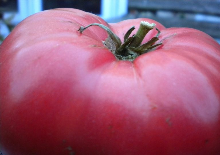 Плоды этого сорта имеют слегка приплюснутую форму