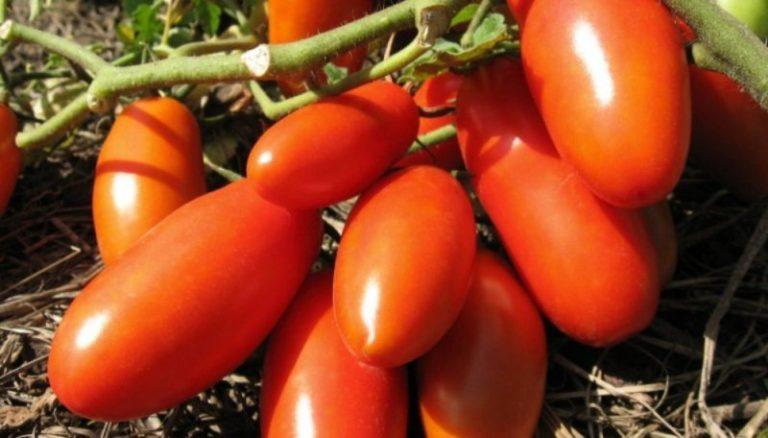 Цвет плодов красный или розовый, причем, по своим характеристикам они ничем не отличаются между собой