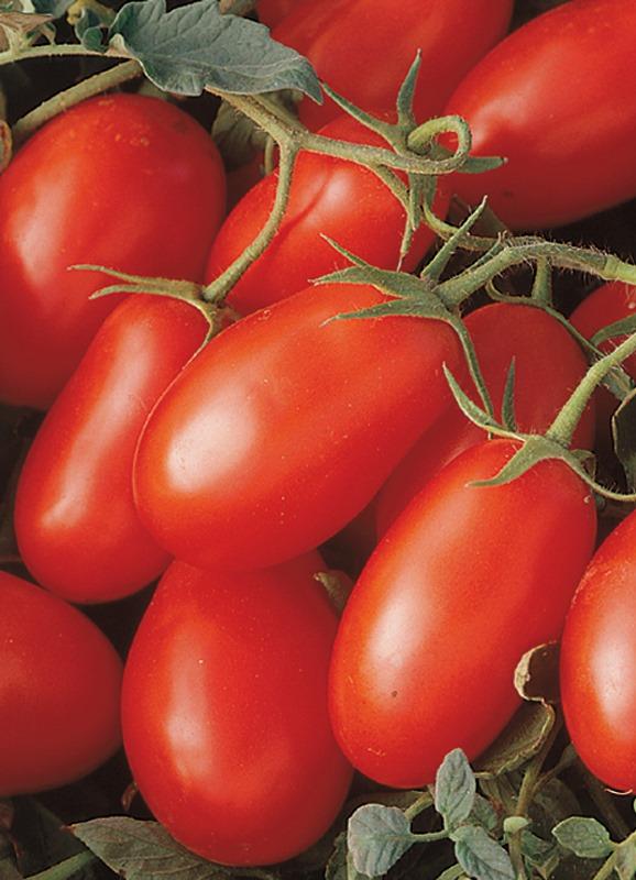 Если правильно и своевременно вносить удобрения в почву, то томаты сорта Ракета продемонстрируют себя с лучшей стороны
