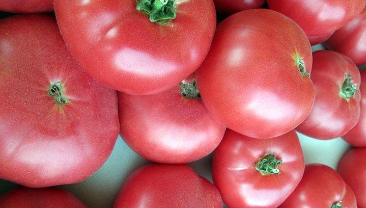 Лучшие сорта розовых томатов были бы неполными, если не было томата Розовая мечта