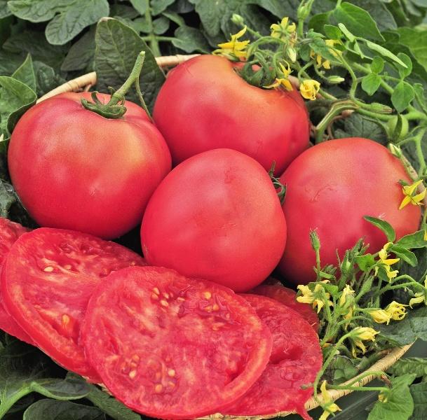 На фото можно увидеть, что данный сорт вряд ли пригодиться для баночного консервирования, но как салатный вариант томата незаменим