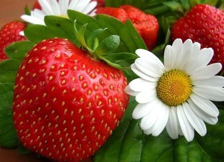 Клубника - капризная ягода