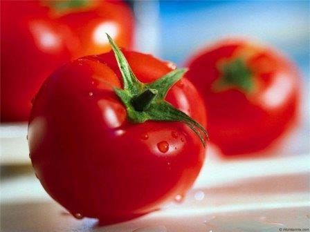 Уход за помидорами в теплице из поликарбоната не требует тяжелого труда и больших расходов