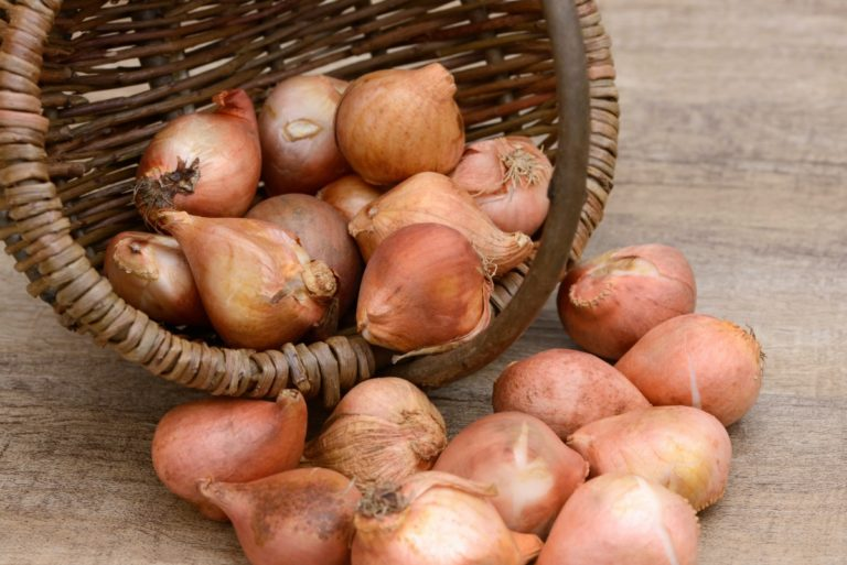 Луковицы удобно хранить в широких ящиках с низкими бортиками и сетчатым дном