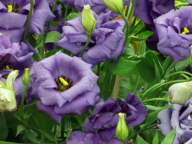 Растения не стоит садить совсем рядом, иначе часть из них будет заглушена более сильными собратьями