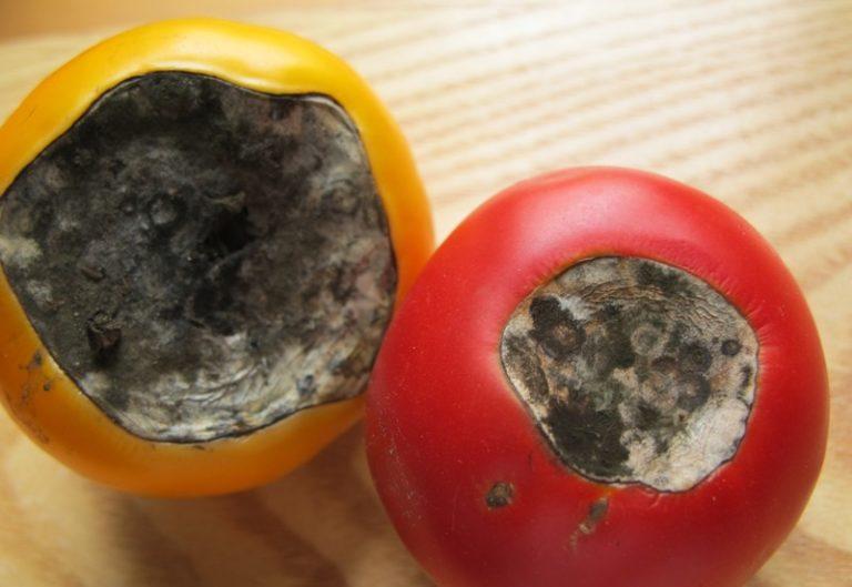 Одна из основных причин возникновения вершинной гнили томатов - нарушение баланса кальция и азота в растении