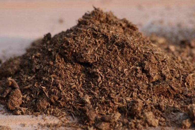 Хорошей основой для субстрата в случае выращивания грибов вешенок является солома, кукурузный стебель, шелуха семечек, стружка лиственницы