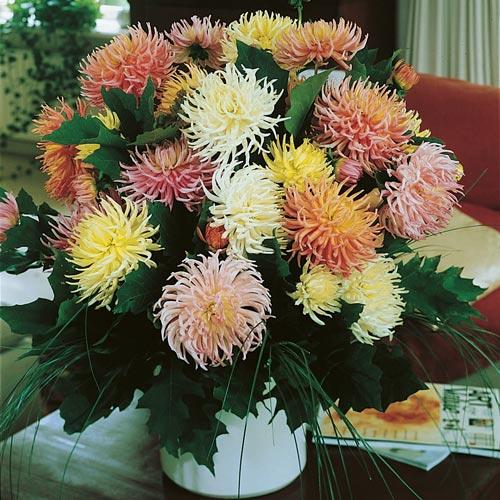 Цветы «Георгина Кактусовидная, смесь» на фото могут быть совершенно разными
