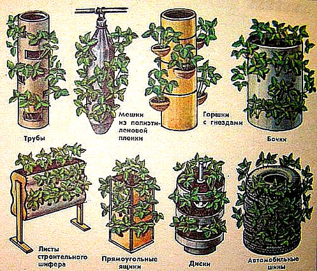 Вертикальным способом можно выращивать ягоды на балконе, около гаража, в оранжереях и во дворе частного дома