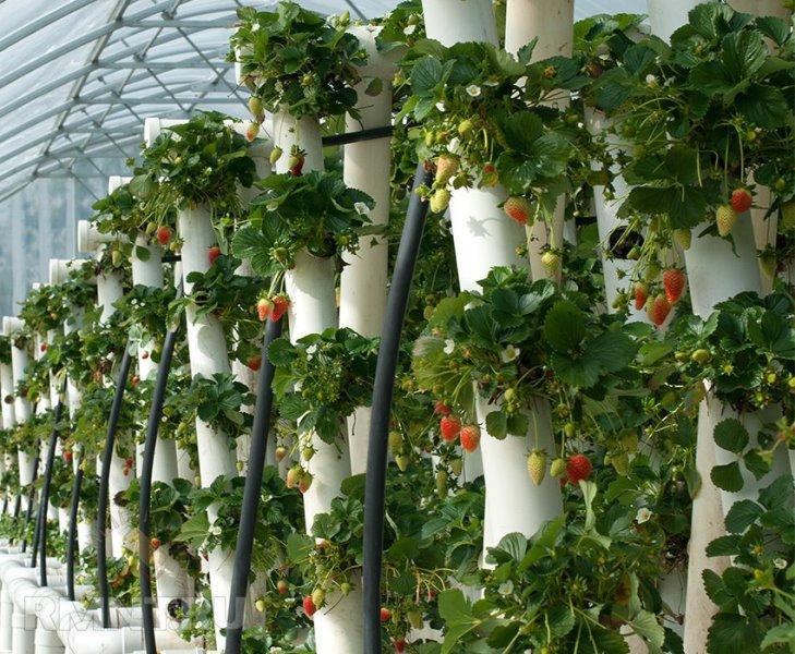 Вертикальная грядка для клубники — это не экзотика, а реализация высоких технологий и творческого подхода к выращиванию ягод