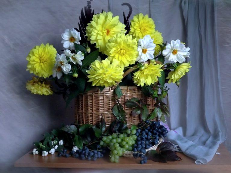 Желтые георгины — это восхитительные и таинственные цветы