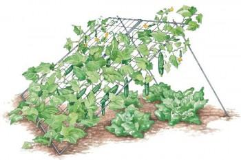 Вертикальные грядки для огурцов считаются наиболее удобным вариантом выращивания данной культуры