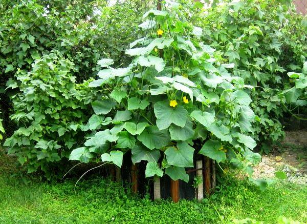 Многие предпочитают делать такие грядки больше из-за красоты, а не из-за удобства сбора урожая и ухода за растениями