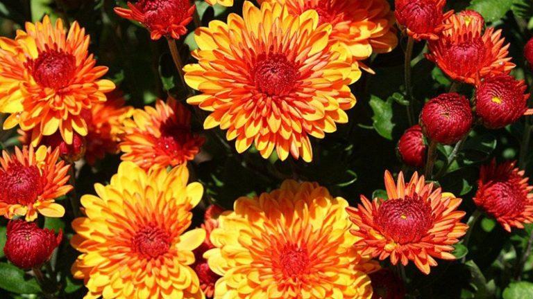 Цветам, посаженным в теплице, не должно быть очень жарко и дискомфортно