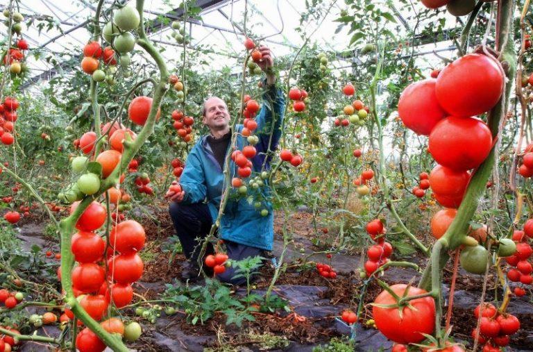 Самое главное в тяжелом сражении за урожай овощей - постоянный мониторинг состояния растений и вдумчивый поиск причин появления любых негативных признаков с целью их устранения