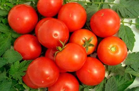 Каждый огородник мечтает возделывать овощи с наименьшими усилиями и при этом получать прекрасный результат