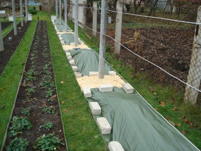 Когда используется пленка для укрытия винограда, нужно контролировать отсутствие нанесения утеплителя на почки растения