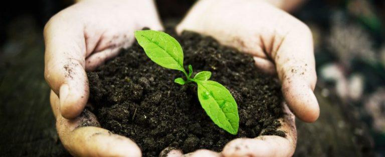 В качестве еще одной причины, почему завяли огурцы в теплице, выступает неправильное содержание питательных веществ в составе почвы