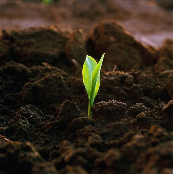 Важно содержание в почвенном составе полезных микроэлементов, активных веществ и органики