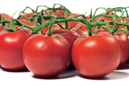 Выращивание томатов в теплице из поликарбоната требует дополнительных знаний