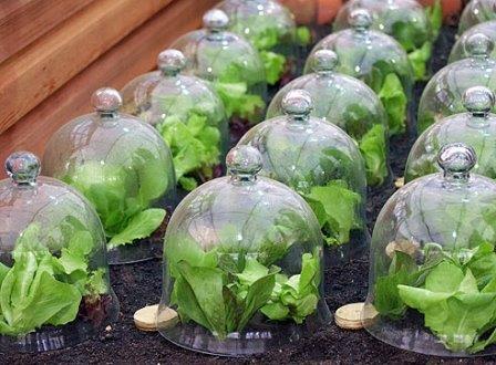 Как известно, владельцы небольших теплиц стараются посадить в них как можно больше различных культур
