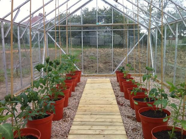 Возможность выращивания рассады в теплице зависит от наличия в ней дополнительного обогрева