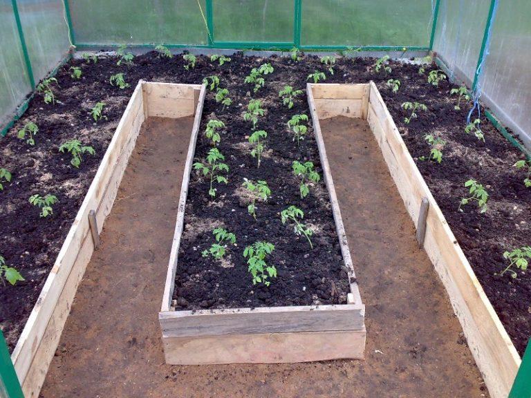 Несмотря на то что любой огородник может самостоятельно определить, как сажать помидоры в теплице из поликарбоната, все же лучше делать грядки так, чтобы они тянулись с юга на север