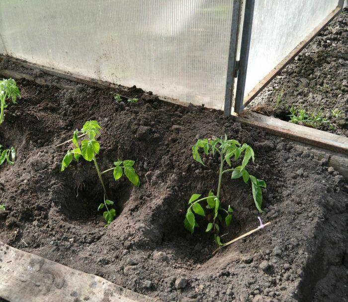 Очень важно следить за влажностью почвы и температурой в теплице