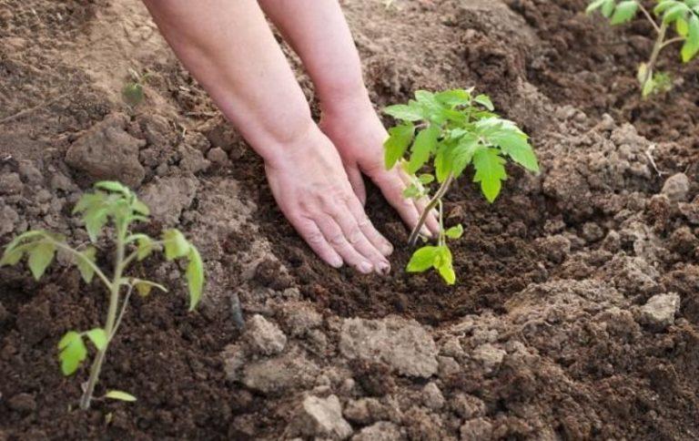 В теплицы с обогревом можно пересаживать рассаду в начале апреля