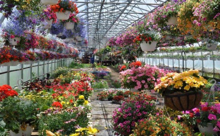 Цветочный бизнес считается наиболее перспективным