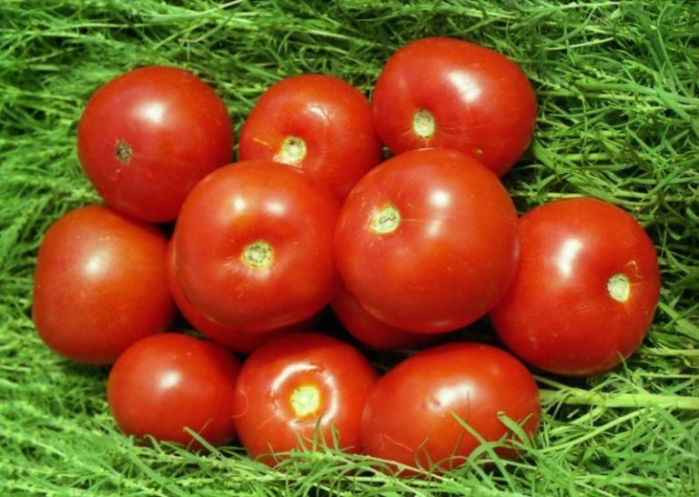 Данная разновидность томатов популярна уже долгое время