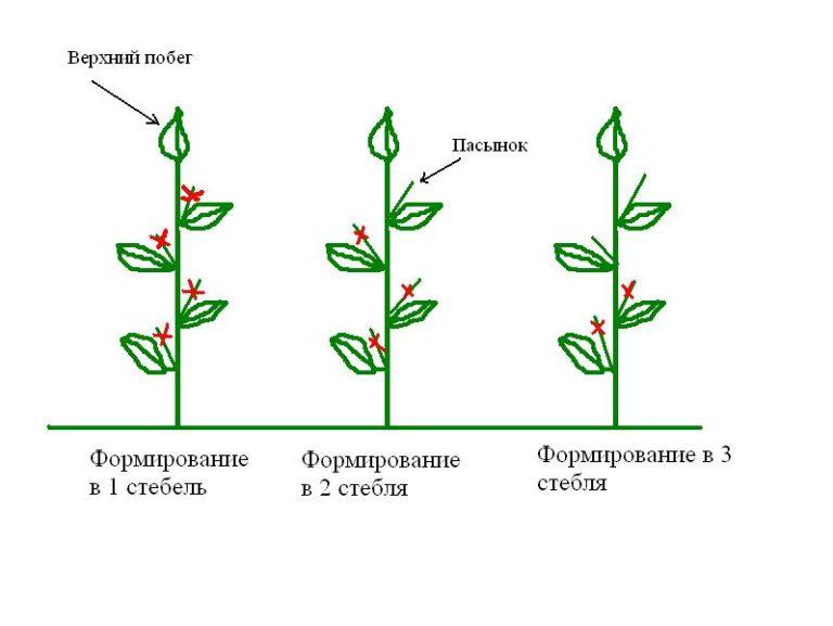Прищипывают и удаляют лишние побеги на кустах перца чаще у высокорослых растений