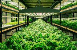 Теплица для выращивания зелени – правильное питание и возможность заработать