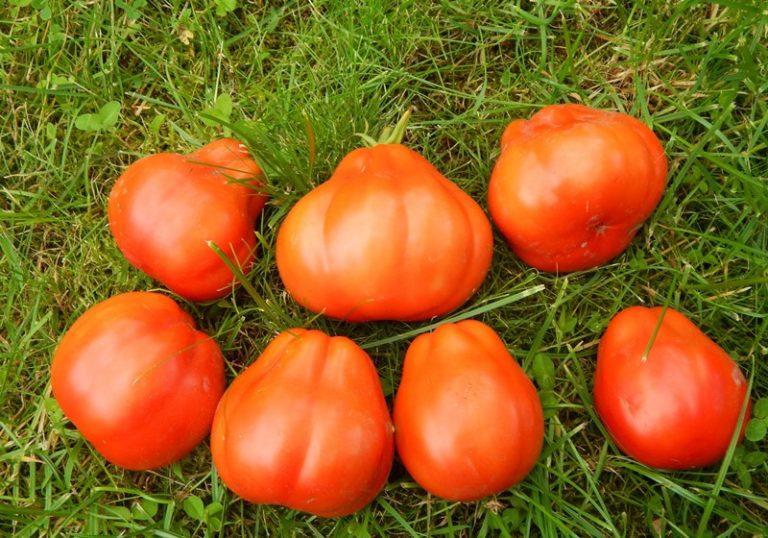 Величина урожая зависит от состояния почвы, погодных условий, особенностей растения, полива и т.д.