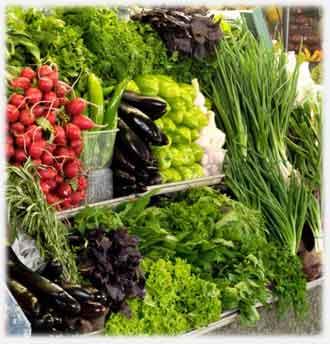 Выращивание зелени в теплице как бизнес: преимущества, особенности, способы реализации урожая