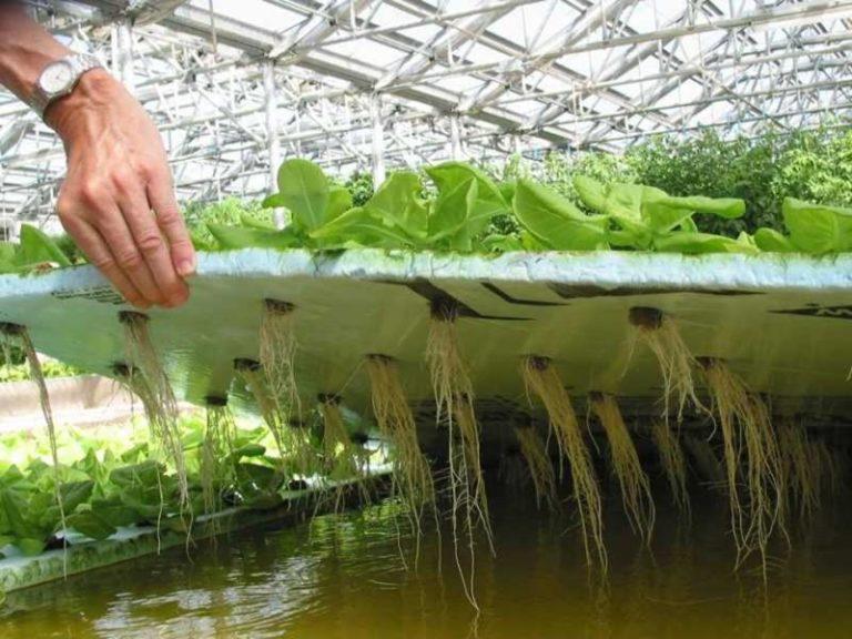 выращивание зелени в теплице на гидропонике