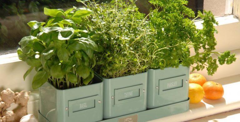 Выращивать зелень лучше в пластмассовых контейнерах, деревянные ящики не практичны, тяжелые и часто протекают