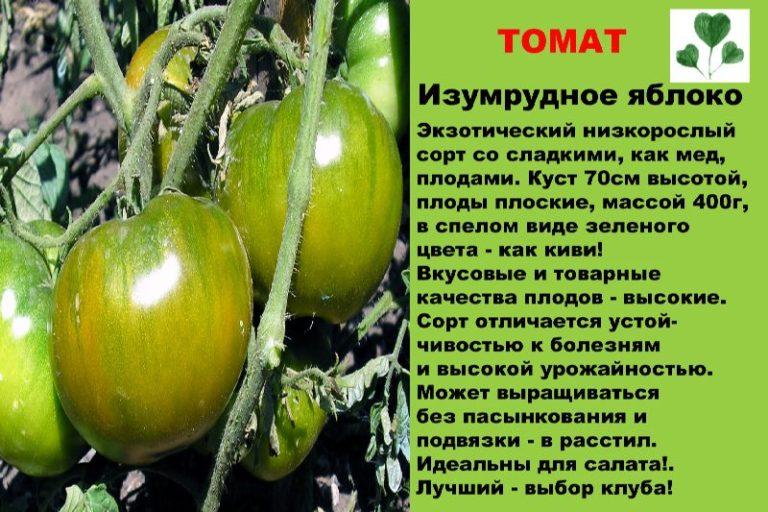 Если нужны сорта ранних помидоров, то подойдет «Изумрудное яблоко»