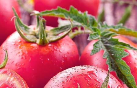 На рубеже 20-21 веков отечественные селекционеры подарили огородникам серию гибридных сортов томата - помидоры Золотое Малиновое Чудо
