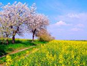 Природа в мае